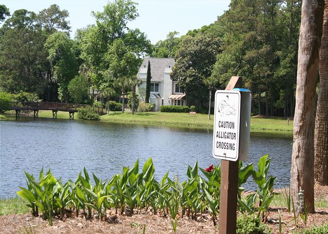 Evian 240 - Alligator Crossing - HiltonHeadRentals.com