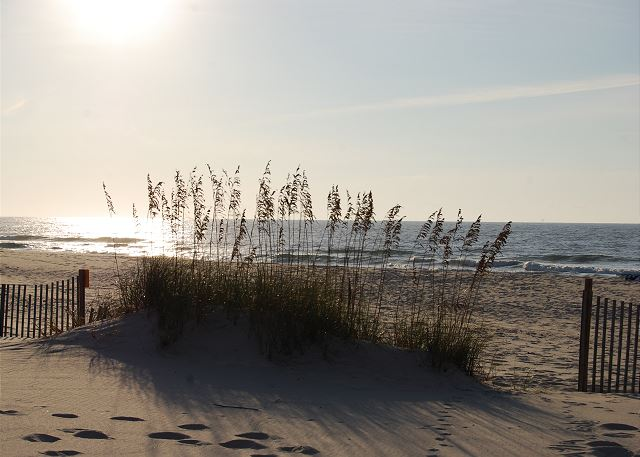 The beautiful dunes on our gorgeous Fort Morgan beach.