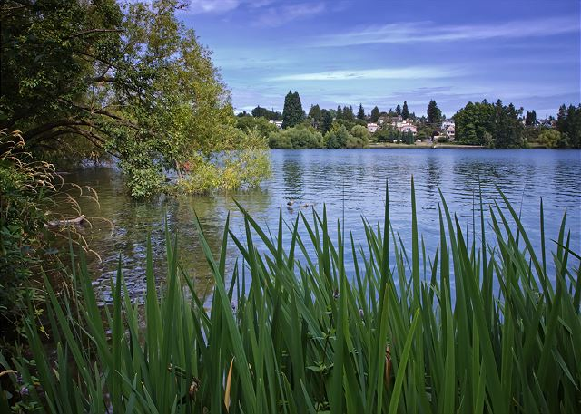 Greenlake down the hill is the perfect walking and jogging spot