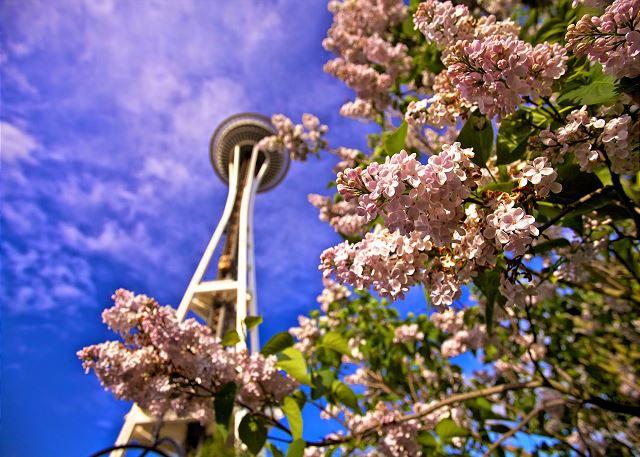 Seattle is beautiful in all seasons!