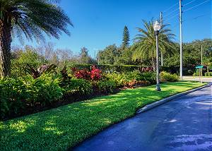 Landscaping along the entry and exit of this Gated Gulfport Community of Villas Del Verde