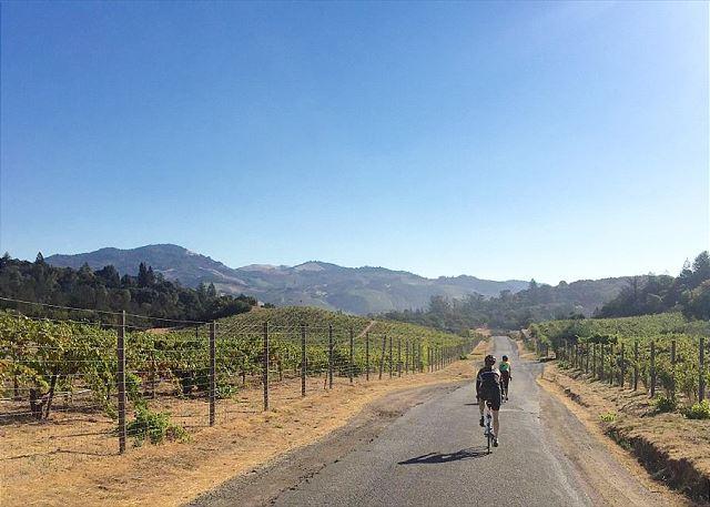 Bike through vineyards in California's wine country #233426