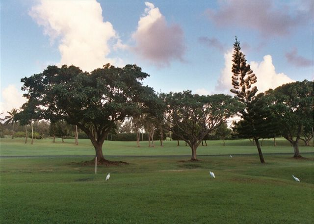 View of golf course