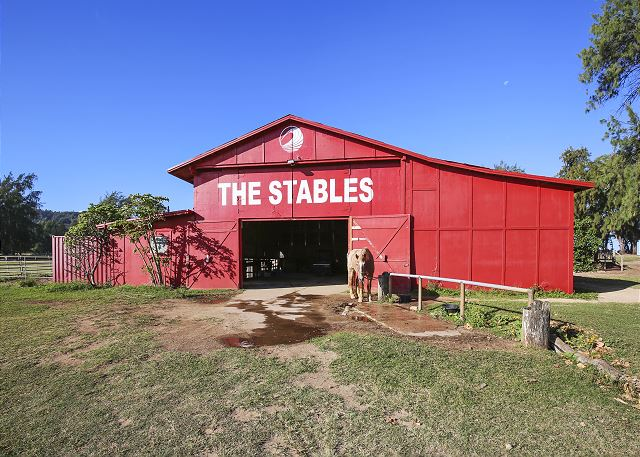 Turtle Bay Stables