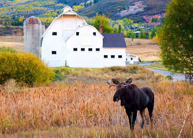 """The White Barn"" #PCMoose"