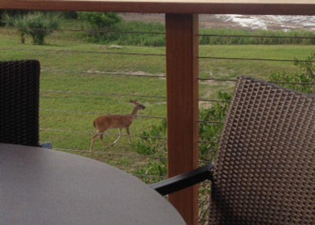 Deer in the Morning.