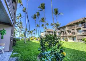 Kona Isle is great for Whale Watching & relaxing by the oceanfront pool